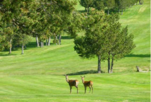 Golf club de Font-Romeu - 66